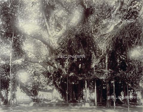 PDC-S-003980-0004 - Scorcio di un giardino di Calcutta popolato di alberi - Data dello scatto: 1880-1890 - Archivi Alinari, Firenze