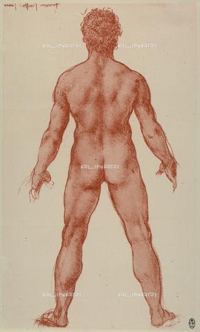 PDP-S-000006-290B - Studio di nudo maschile visto da tergo; disegno eseguito da Leonardo da Vinci a sanguigna su carta bianca. L'opera è conservata nella Biblioteca Reale di Windsor - Data dello scatto: 2001 - Archivi Alinari, Firenze