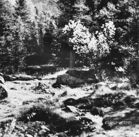 PFA-F-001469-0000 - Paesaggio montano, Engadina, Canton dei Grigioni, Svizzera - Data dello scatto: 1986-1987 - Archivi Alinari, Firenze