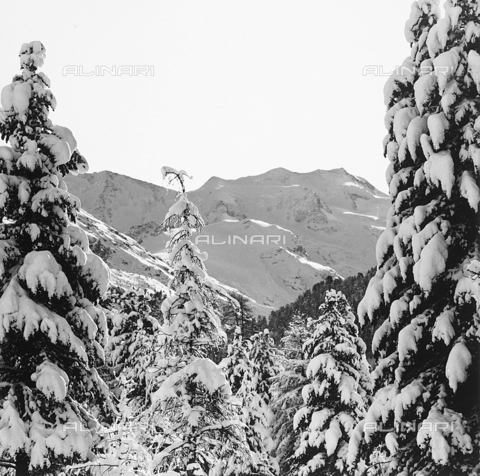 PFA-F-001501-0000 - Spruce firs and mountains covered in snow in Valle dell'Engadina, in Switzerland