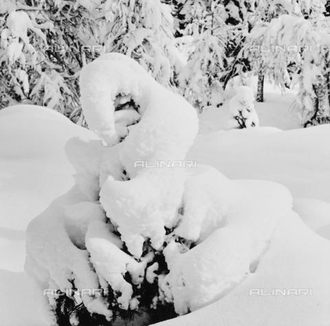 PFA-F-001502-0000 - Neve, Engadina, Canton dei Grigioni, Svizzera - Data dello scatto: 12/1992 - Archivi Alinari, Firenze