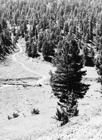 PFA-F-001539-0000 - Paesaggio montano, Engadina, Canton dei Grigioni, Svizzera - Data dello scatto: 05/1990 - Archivi Alinari, Firenze