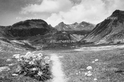PFA-F-001591-0000 - Paesaggio montano, Engadina, Canton dei Grigioni, Svizzera - Data dello scatto: 08/1992 - Archivi Alinari, Firenze