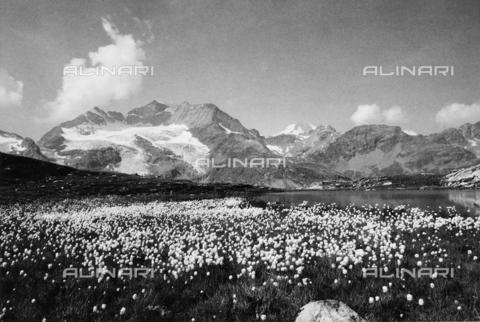 PFA-F-001592-0000 - Paesaggio montano sopra il Bernina, Engadina, Canton dei Grigioni, Svizzera - Data dello scatto: 08/1992 - Archivi Alinari, Firenze