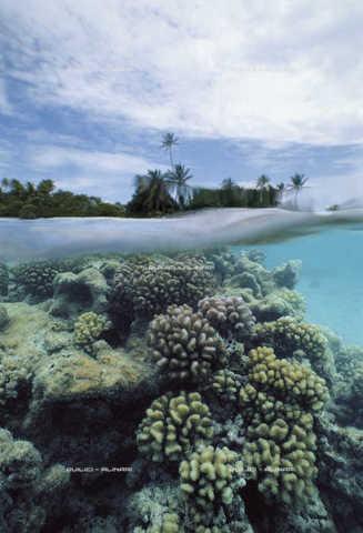QFA-S-000007-00FQ - A pelo d'acqua la barriera corallina, interna alla laguna di Ranghiroa, Arcipelago Tuamutu. Polinesia - Data dello scatto: 1990 - Folco Quilici © Fratelli Alinari