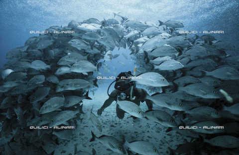 """QFA-S-000009-00FQ - Le """"nubes"""", banchi fitti di pesce tipici del basso fondale attorno a Isla Mujeres, Mar dei Caraibi. Messico - Data dello scatto: 1986 - Folco Quilici © Fratelli Alinari"""