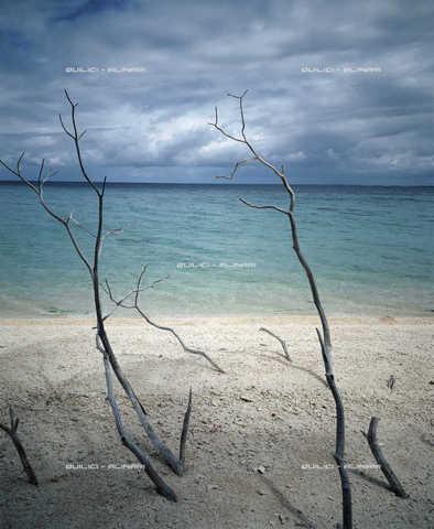 QFA-S-007002-00FQ - Spiaggia madreporica attorno alla laguna dell'atollo di Ahé. Polinesia - Data dello scatto: 1955 - Folco Quilici © Fratelli Alinari