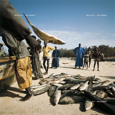 QFA-S-007931-00SE - Scarico del pescato sulla spiaggia di Kayar, Senegal - Data dello scatto: 1962 - Folco Quilici © Fratelli Alinari