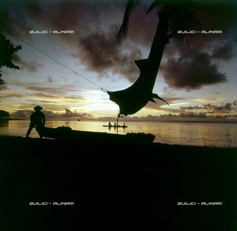 QFA-S-053030-00SP - Isole Tuamotu. Rangiroa. Cattura di squalo tigre. - Data dello scatto: 1959 - Folco Quilici © Fratelli Alinari