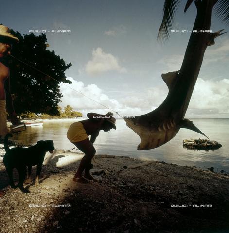 QFA-S-053033-00SP - Isole Tuamotu. Rangiroa. Cattura di squalo tigre. - Data dello scatto: 1959 - Folco Quilici © Fratelli Alinari
