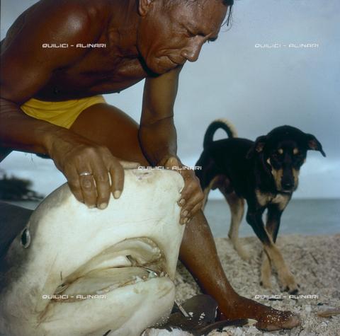 QFA-S-053034-00SP - Isole Tuamotu. Rangiroa. Cattura di squalo tigre. - Data dello scatto: 1959 - Folco Quilici © Fratelli Alinari