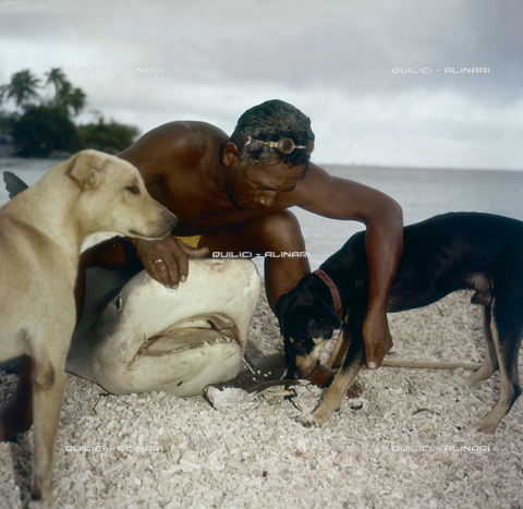 QFA-S-053037-00SP - Isole Tuamotu. Rangiroa. Cattura di squalo tigre. - Data dello scatto: 1959 - Folco Quilici © Fratelli Alinari