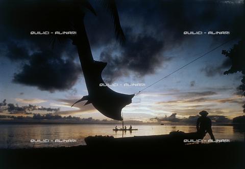 QFA-S-053045-00SP - Isole Tuamotu. Rangiroa. Cattura di squalo tigre. - Data dello scatto: 1959 - Folco Quilici © Fratelli Alinari