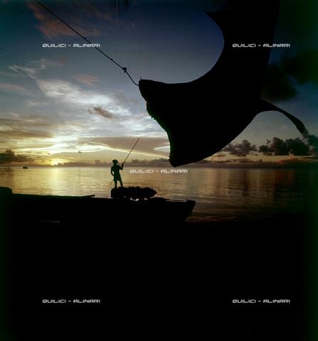 QFA-S-053053-00SP - Tuamotu Islands. Rangiroa. Capturing a Tiger Shark. - Data dello scatto: 1959 - Folco Quilici © Fratelli Alinari