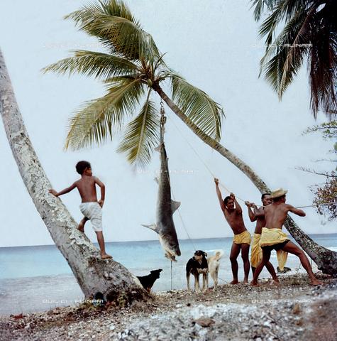QFA-S-053059-00SP - Isole Tuamotu. Rangiroa. Cattura di squalo tigre. - Data dello scatto: 1959 - Folco Quilici © Fratelli Alinari