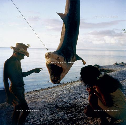 QFA-S-053060-00SP - Isole Tuamotu. Rangiroa. Cattura di squalo tigre. - Data dello scatto: 1959 - Folco Quilici © Fratelli Alinari