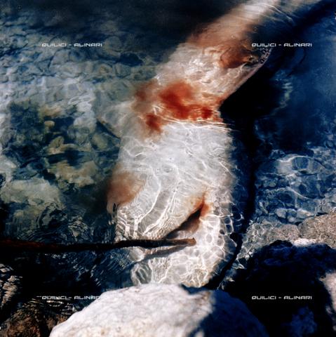 QFA-S-053069-00SP - Isole Tuamotu. Rangiroa. Cattura di squalo tigre. - Data dello scatto: 1959 - Folco Quilici © Fratelli Alinari