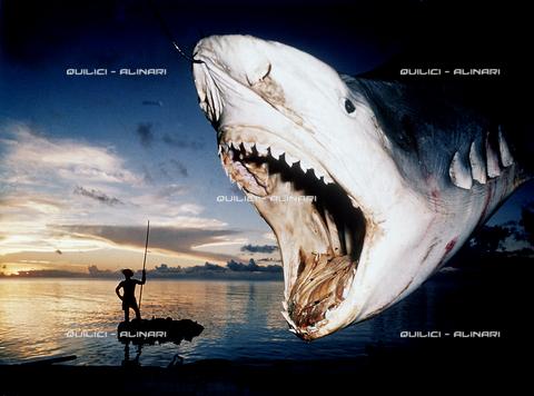 QFA-S-053087-00SP - Tuamotu Islands. Rangiroa. Capturing a Tiger Shark. - Data dello scatto: 1961 - Folco Quilici © Fratelli Alinari