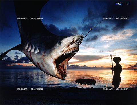 QFA-S-053089-00SP - Isole Tuamotu. Rangiroa. Cattura di squalo tigre. - Data dello scatto: 1959 - Folco Quilici © Fratelli Alinari