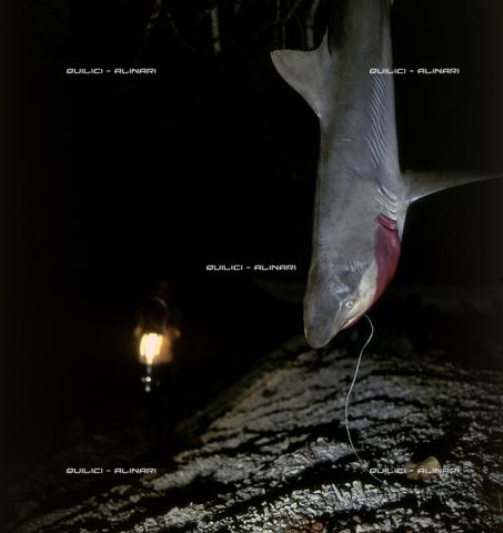QFA-S-054406-00SP - Isole Tuamotu. Manihi. Pesca notturna all'amo, cattura di piccoli squali - Data dello scatto: 1955 - Folco Quilici © Fratelli Alinari