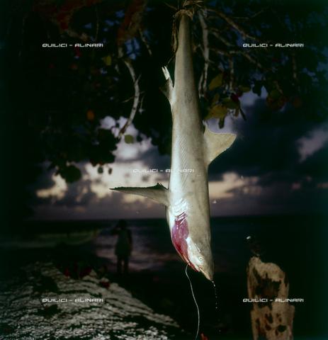 QFA-S-054407-00SP - Isole Tuamotu. Manihi. Pesca notturna all'amo, cattura di piccoli squali - Data dello scatto: 1955 - Folco Quilici © Fratelli Alinari