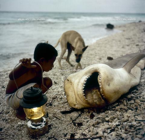 QFA-S-055406-00SP - Isole Tuamotu. Rangiroa. Bambini e piccolo squali catturati. - Data dello scatto: 1955 - Folco Quilici © Fratelli Alinari
