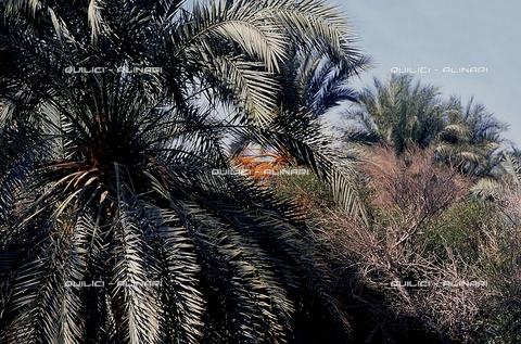 QFA-S-DIA076-00EG - Oasi di Siwa. Il paese - Data dello scatto: 2002 - Folco Quilici © Fratelli Alinari