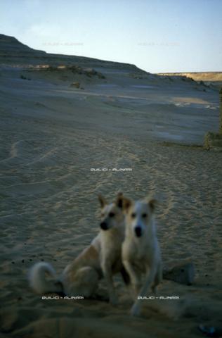 QFA-S-DIA098-00EG - Deserto a sud dell'Oasi di Siwa. - Data dello scatto: 2002 - Folco Quilici © Fratelli Alinari