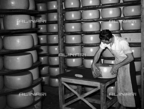 RCB-F-001001-0000 - Un momento della lavorazione del grana: la stagionatura - Data dello scatto: 1949 - Archivio Bruni/Gestione Archivi Alinari, Firenze