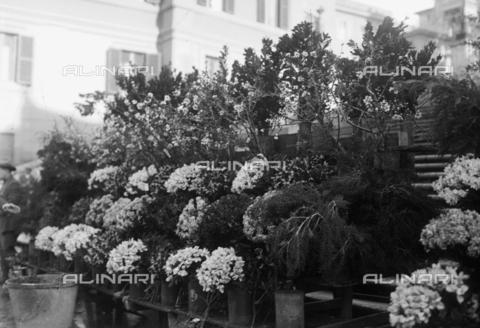 RCB-F-002700-0000 - Mostra di fiori, Roma, piazza di Spagna - Data dello scatto: 1926 - Archivio Bruni/Gestione Archivi Alinari, Firenze