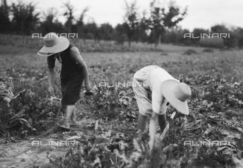 RCB-F-003703-0000 - Donne al lavoro in una piantagione di zucchero - Data dello scatto: 1928 - Archivio Bruni/Gestione Archivi Alinari, Firenze