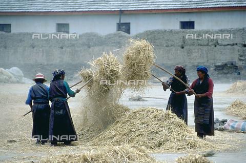 RCS-S-CP0061-6012 - Tibet. Un gruppo contadini impegnati nella trebbiatura manuale di cereali in un'aia - Data dello scatto: 1990-1999 - RCS / Gestione Archivi Alinari, Firenze