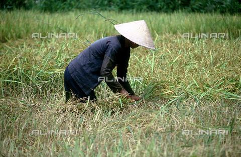 RCS-S-CP0065-6481 - Contadina al lavoro nelle risaie, a Danang. Vietnam - Data dello scatto: 1990-1999 - RCS / Gestione Archivi Alinari, Firenze