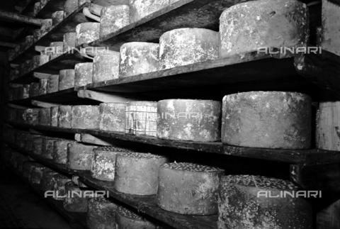 RCT-F-011587-0000 - La fase di stagionatura del formaggio della ditta Polenghi - Data dello scatto: 24/11/1950 - Archivio Toscani/Gestione Archivi Alinari, Firenze