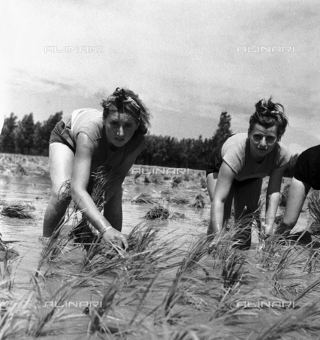 RCT-F-053603-0000 - Servizio Mondariso a Rozzano: mondine a lavoro - Data dello scatto: 22/06/1956 - Archivio Toscani/Gestione Archivi Alinari, Firenze