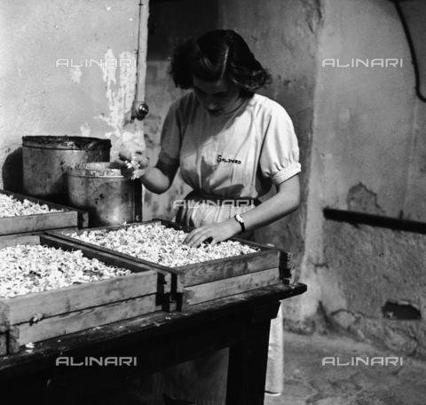RCT-S-050692-0006 - Fabbricazione artigianale di profumo a Grasse, in Provenza - Data dello scatto: 08/1955 - Archivio Toscani/Gestione Archivi Alinari, Firenze