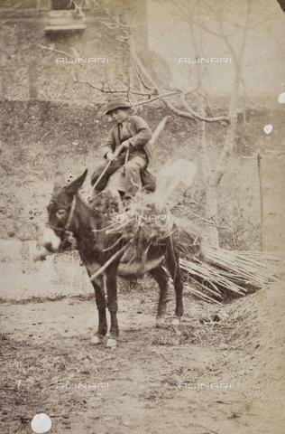 REA-F-001081-0000 - Bambino su un asino che trasporta legna - Data dello scatto: 1880-1890 - Archivi Alinari, Firenze