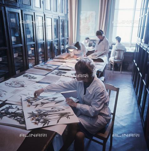 RNA-S-000300-7977 - Laboratory of The Vavilov All-Union Institute of Plant Industry, St. Petersburg - Data dello scatto: 01/05/1973 - Vladimir Bogatyrev / Sputnik/ Alinari Archives
