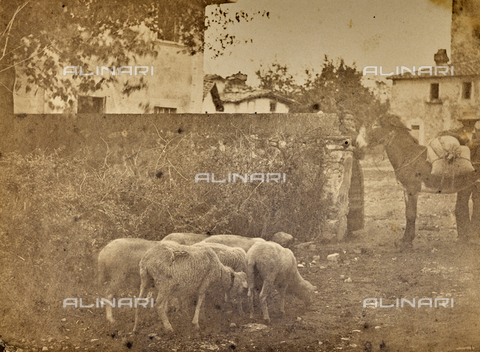 SCC-F-001258-0000 - Countryside life - Data dello scatto: 1870-1875 ca. - Archivi Alinari, Firenze