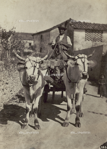 SCC-F-001265-0000 - Cart pulled by oxen in the Tuscan countryside - Data dello scatto: 1870 ca. - Archivi Alinari, Firenze