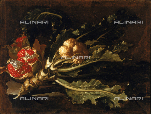 SEA-F-000256-0000 - 'Pomegranate and cabbage' painting by Paolo Porpora, formerly in the Uffizi Gallery in Florence. Now in the Museum of Still Life (Natura Morta), deposits. - Date of photography: 1996 - Seat Archive/Alinari Archives, Reproduced with the permission of Ministero per i Beni e le Attività Culturali