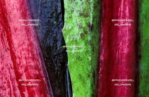 SPA-F-001117-0000 - colori nella pioggia@Radicchio di Treviso Rosso Tardivo IGP