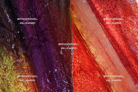 SPA-F-001123-0000 - pagine colorate@Radicchio di Treviso Rosso Tardivo IGP