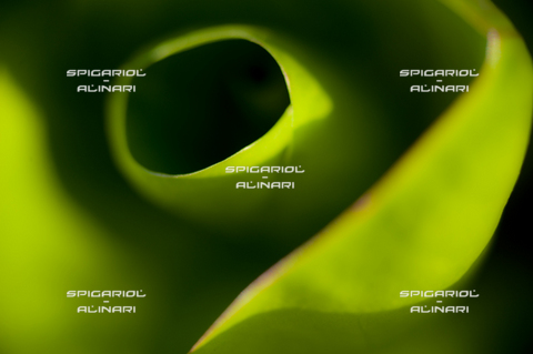 SPA-F-001125-0000 - verdi sfumature@Radicchio Verdon di Roncade