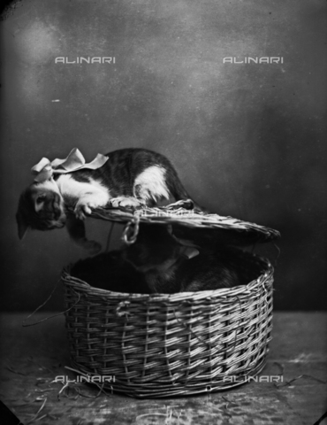 TCA-F-000518-0000 - Two kittens in a basket