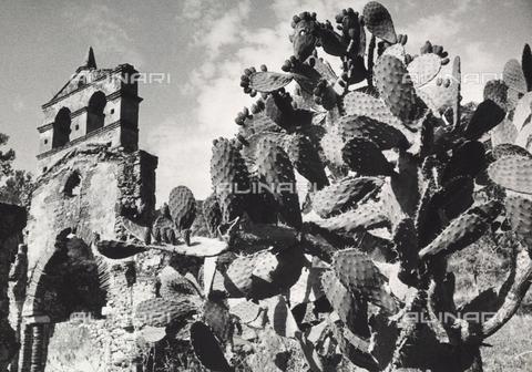 TCU-F-000122-0000 - Fichi d'India a Brancaleone (RC), località Santa Maria dei Tridetti - Data dello scatto: 1950 - Touring Club Italiano/Gestione Archivi Alinari
