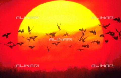 TOP-F-221895-0000 - Il sole. Topografia, Il sole - Data dello scatto: 17/09/2001 - 2001/UNEP / TopFoto / Archivi Alinari