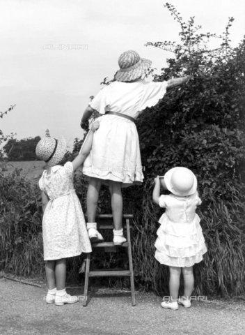 TOP-F-284348-0000 - Raccolta di more selvatiche nel mese di agosto a Farningham. 1936. Tra le due guerre, Raccolta di more selvatiche - Data dello scatto: 1936 - 2005 / TopFoto / Archivi Alinari