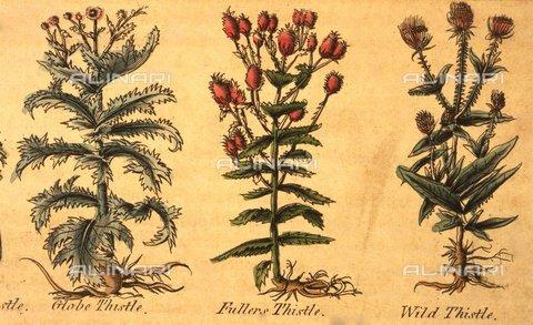 TOP-F-926205-0000 - Tre tipologie di piante all'interno dell'edizione del 1805 dell'Erbario Completo di Nicholas Culpeper (1616-1654) - Charles Walker / TopFoto / Archivi Alinari