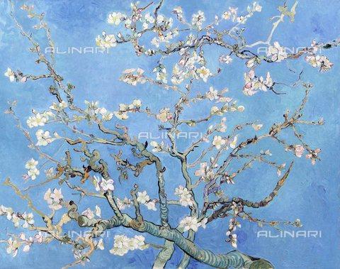TOP-S-CPA003-2753 - Ramo di mandorlo fiorito, olio su tela, Vincent van Gogh (1853-1890), Van Gogh Museum, Amsterdam - Pictures From History / TopFoto / Archivi Alinari